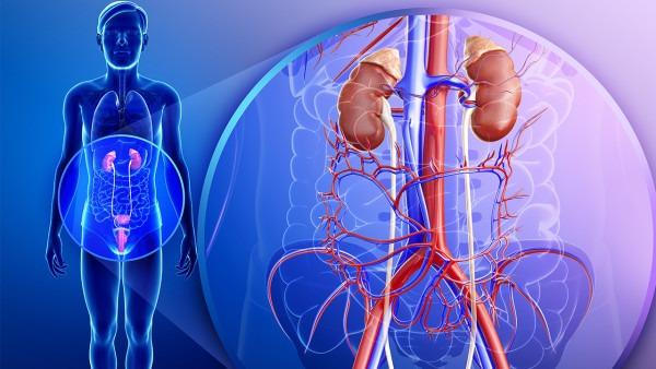肾虚会导致尿毒症吗 临床上尿毒症的4个分期