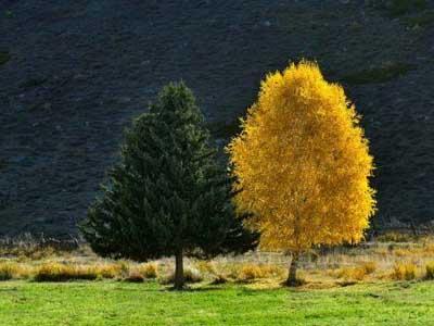 """树木那些不为人知的""""小秘密"""""""