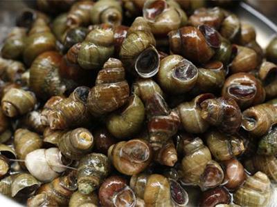 海鲜螺类名称图片