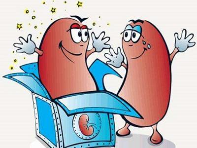 慢性肾小球肾炎手绘图红蓝铅笔