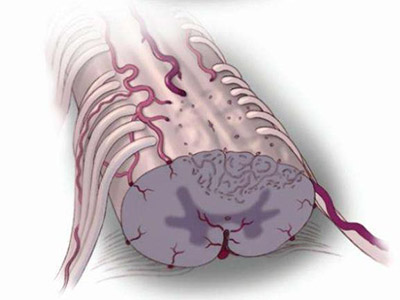 脊髓圆锥和马尾解剖图