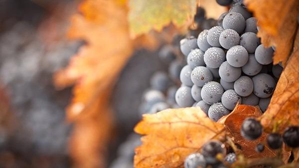冬天吃养生水果 去火去燥抗氧化