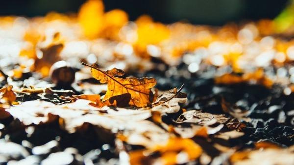 立秋后防肺燥 先别急着贴秋膘