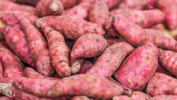 慢性胃炎可以吃红薯吗?结合个人情况来看