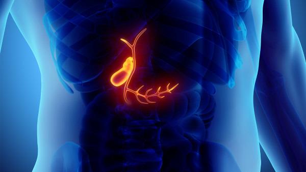 胆囊息肉原因有哪些 引发胆囊息肉的3大因素