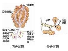 多發性內分泌腺瘤