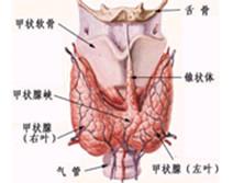 甲状腺功能亢进危象