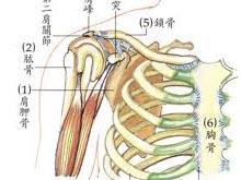 頸肩綜合征
