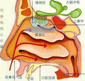 急性鼻竇炎