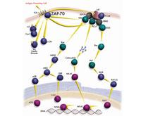 慢性淋巴細胞性白血病