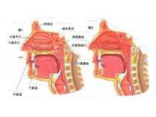 慢性鼻咽炎