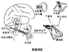 前庭神经元炎