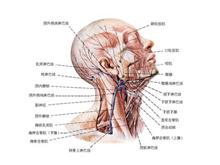 霍奇金淋巴瘤