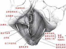 肛提肌綜合征