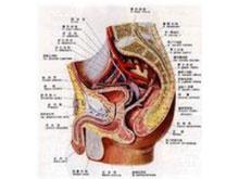 霉菌性尿道炎