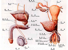老年泌尿系统感染