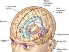 颅内生殖细胞瘤