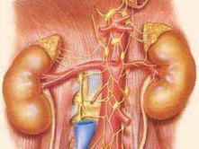 老年梗阻性腎病