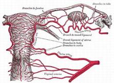 卵巢恶性腹膜间皮瘤