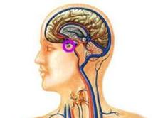 脑垂体功能异常伴发的精神障碍