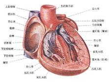 妊娠合并心臟病