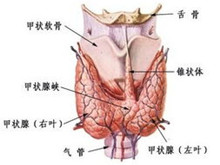 小兒甲狀腺癌