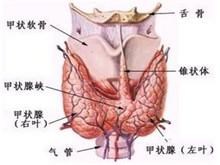 小兒結節性甲狀腺腫