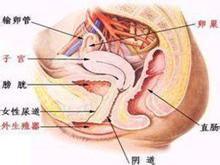 新生兒泌尿系統感染