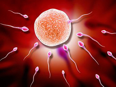 【高龄促排如何获得优质卵子?今日一起来了解】高龄卵子老化怎么改善