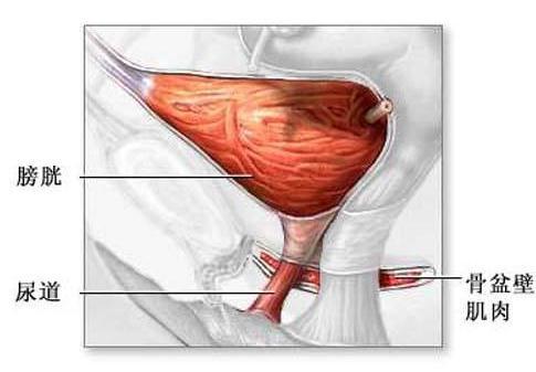 尿液浑浊发红是什么原因 应该如何进行治疗